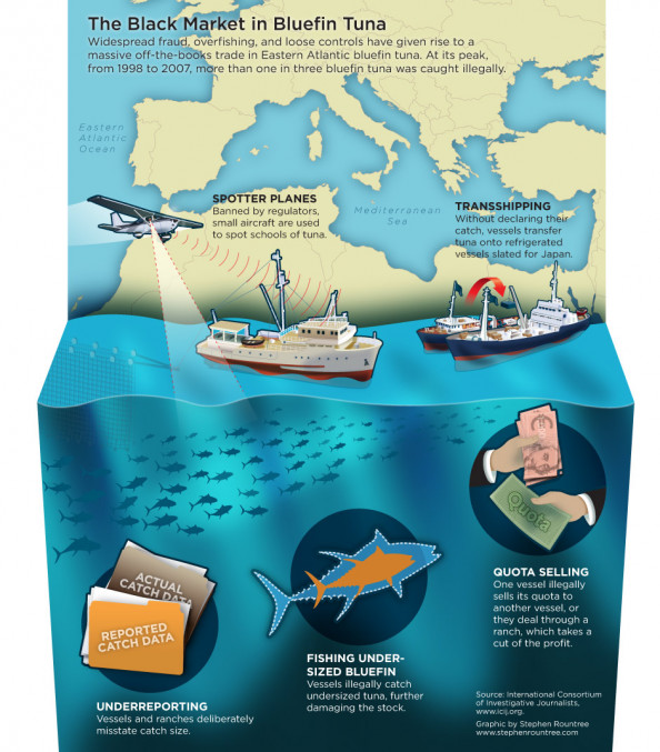 The Black Market in Bluefin Tuna Infographic
