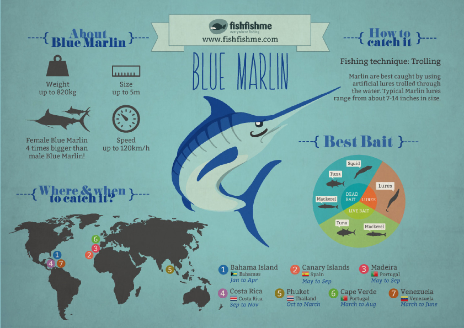 The Blue Marlin Infographic
