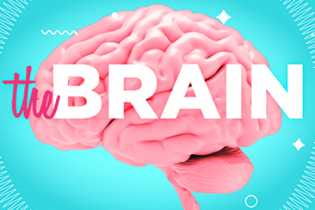 The Brain In Numbers  Infographic