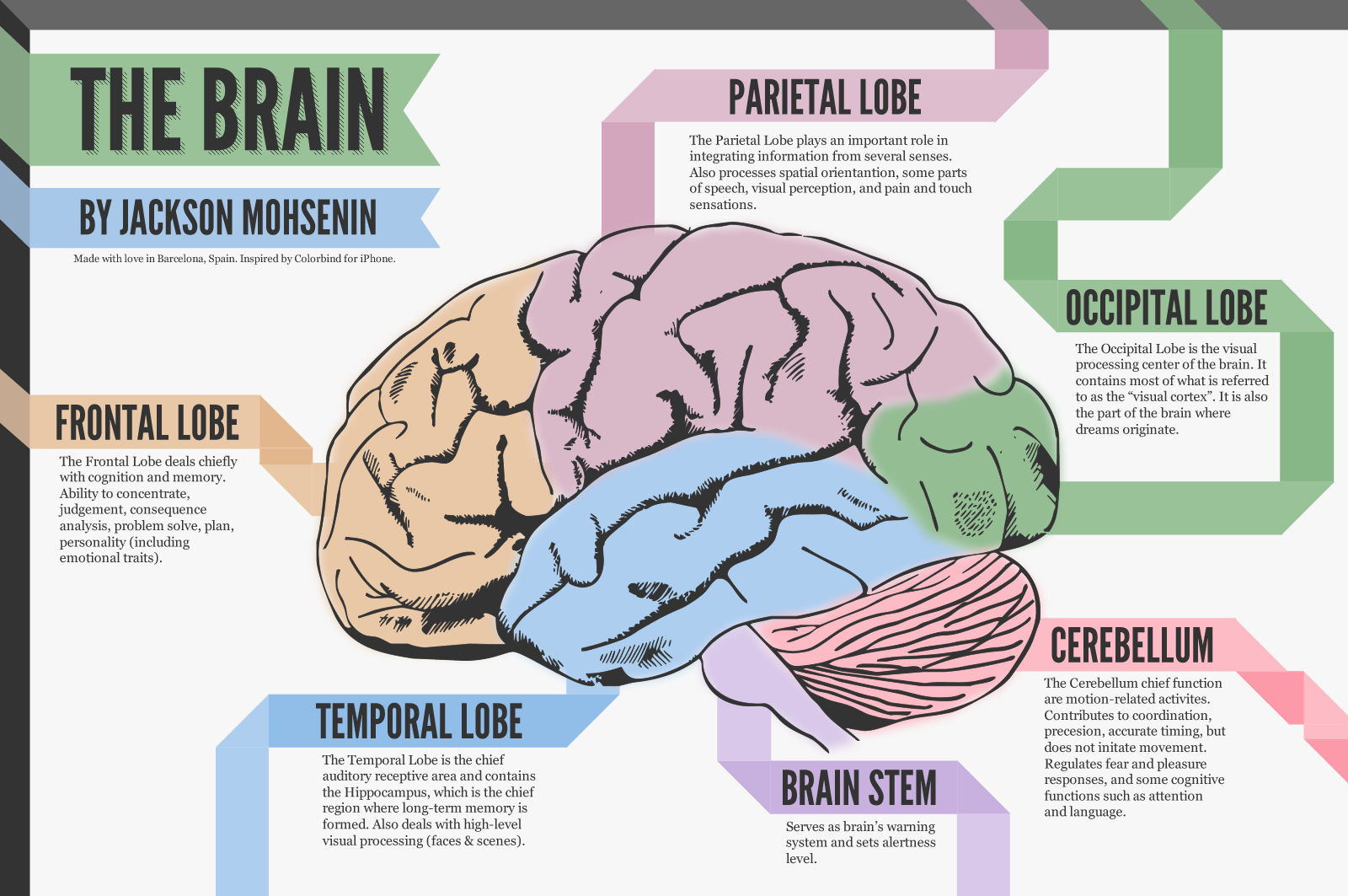 Human Brain Anatomy And Functions Photo 12