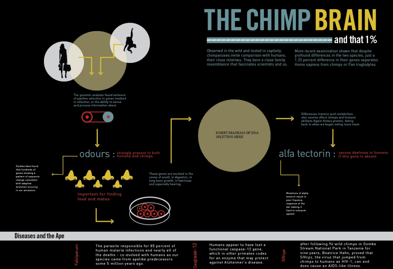 The Chimp Brain Infographic