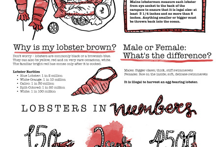 The Complete Guide for Buying a Fresh Lobster Infographic