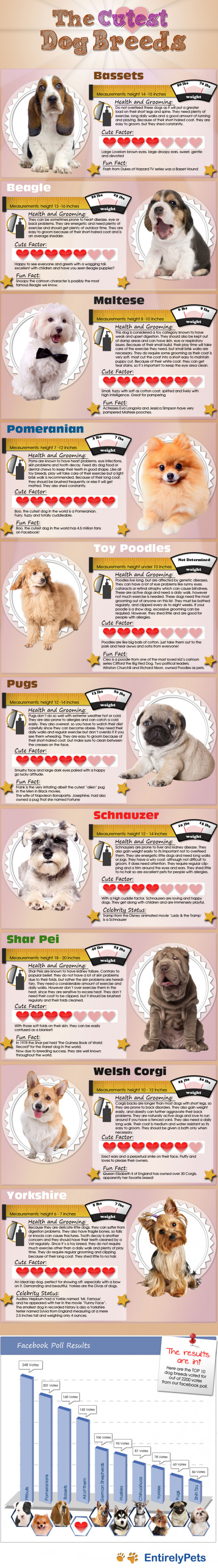 The Cutest Dog Breeds Infographic