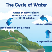 The Cycle of Water Infographic