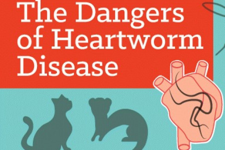 The Dangers of Heartworm Disease Infographic