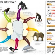 The Difference Between Humans and Animals Infographic