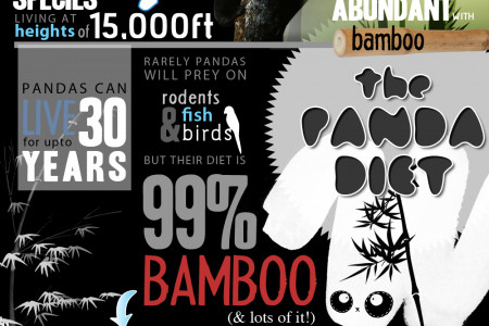 The Endangered Giant Panda Infographic