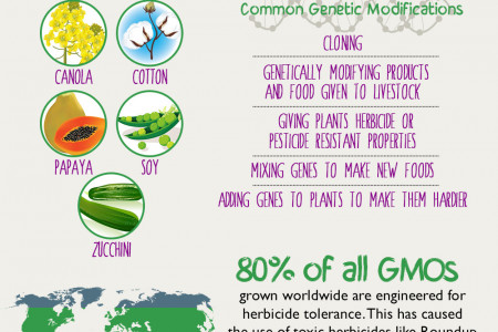 The Facts on Genetically Modified Organisms (GMOs)  Infographic