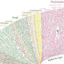 The Great Tree of Life Infographic