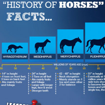 The History of the Horse Infographic
