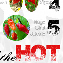 The Hottest of the Hot Infographic
