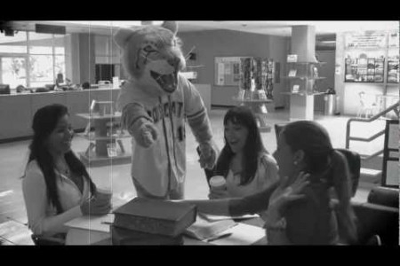 The Library Bobcat - St. Thomas University Halloween Video Infographic