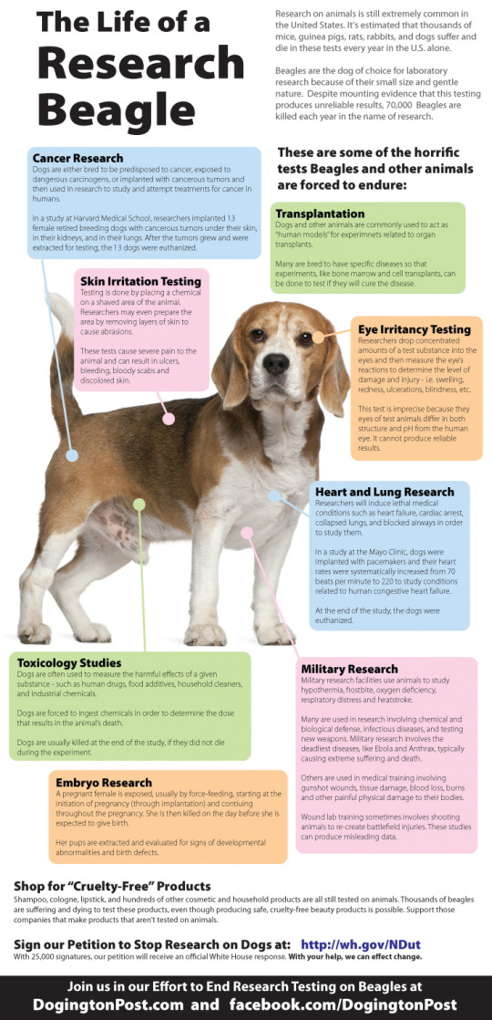 The Life of a Research Beagle