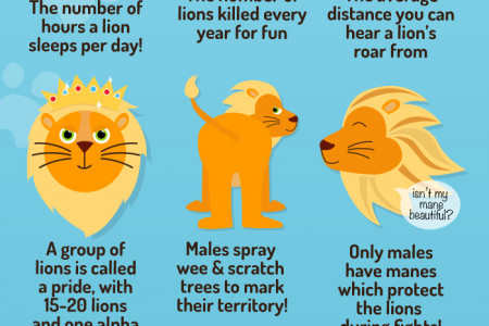 The Mane Attraction Infographic