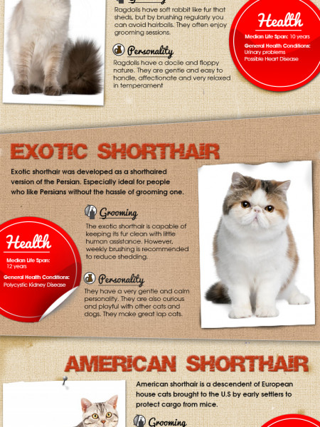 The Most Popular Cat Breeds in the US Infographic