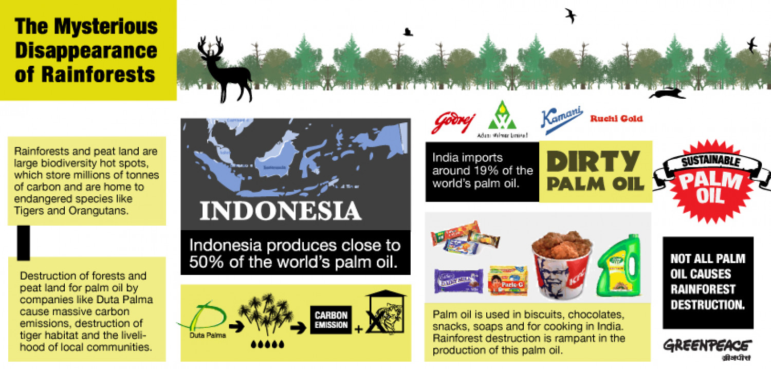 The Mysterious Disappearance of Rainforests Infographic