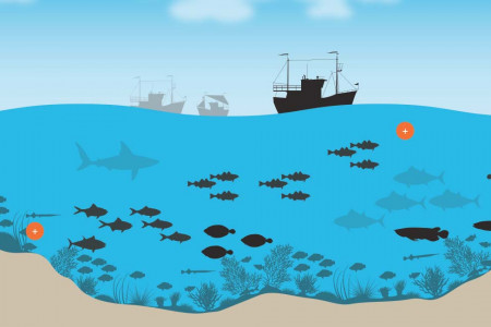 The perils of overfishing Infographic