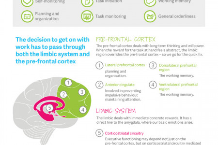The Science of Procrastination  Infographic