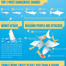 The Shark Survival Guide Infographic