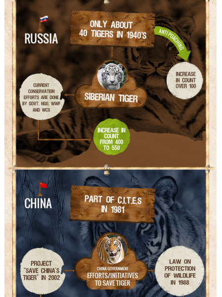 The State of Tigers in Asia Infographic