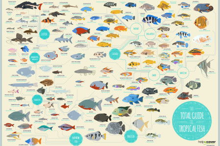The Total Guide To Tropical Fish Infographic