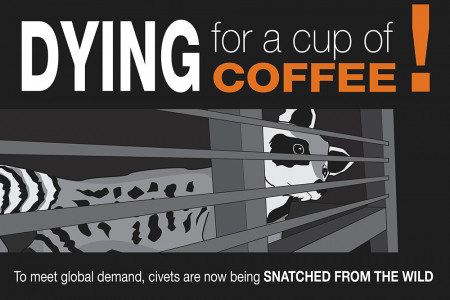 The true cost of the world's most expensive coffee Infographic