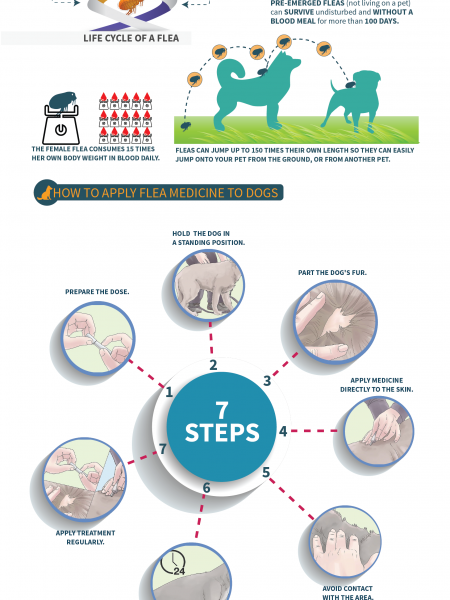 Flea Treatment for Dogs Infographic