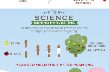 The Ultimate Apple Harvest Guide Infographic