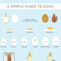 The Ultimate Egg Guide Infographic