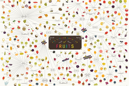 The Various Varieties of Fruits Infographic