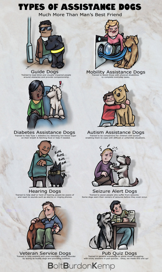 Types of Assistance Dogs