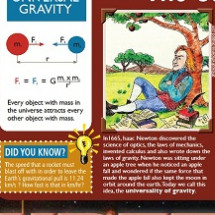 The Wonders of Gravity Infographic