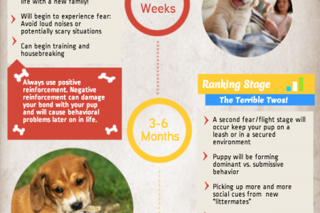 The Wondrous Stages of Puppy Development Infographic
