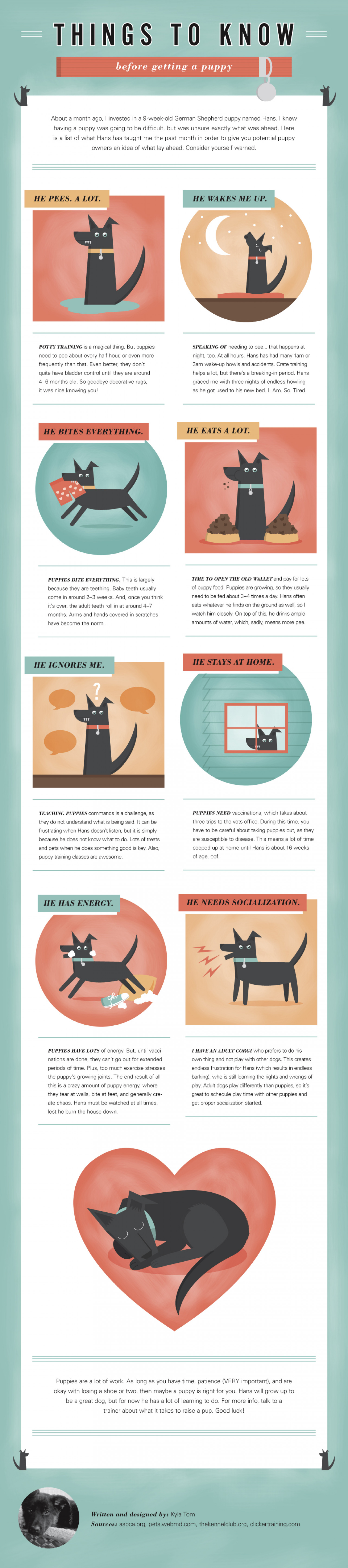 Things to Know Before Getting a Puppy Infographic