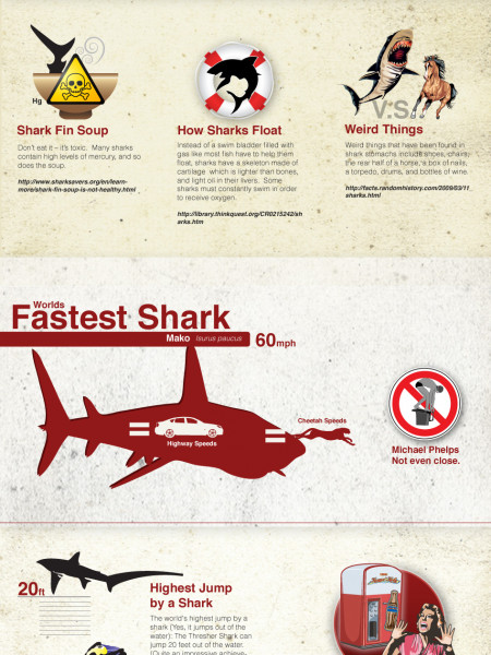 Things You Never Knew About Sharks Infographic