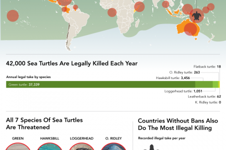 This Is Where It's Still Legal To Hunt Endangered Turtles Infographic