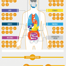This is Your Body on Drugs Infographic
