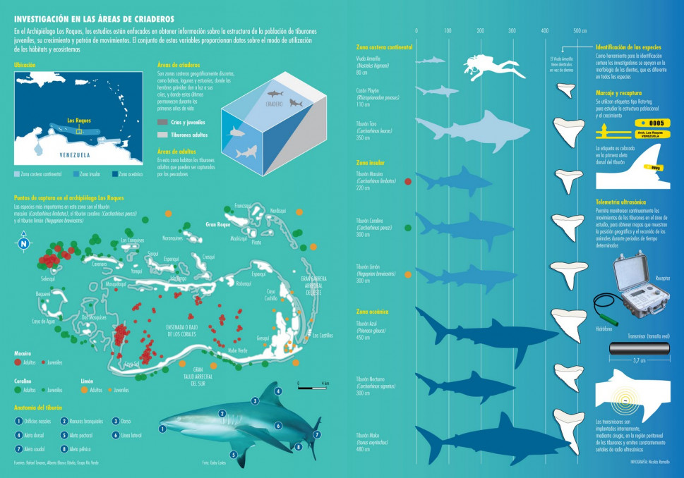 Tiburones en Los Roques Infographic