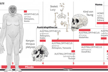 Timeline of the human evolution Infographic