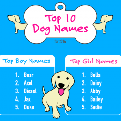 Top 10 Dog Names for 2014   Visual.ly