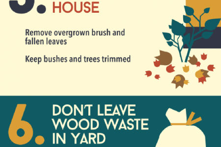Top 10 Ways to Prevent Termites  Infographic