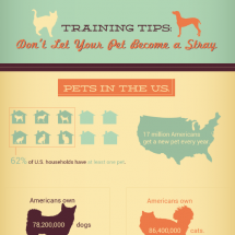 Training Tips: Don't Let Your Pet Become a Stray  Infographic