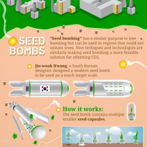Tree Bombing: An Ingenius and Elegant Solution Infographic