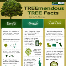 Treemendous Tree Facts Infographic