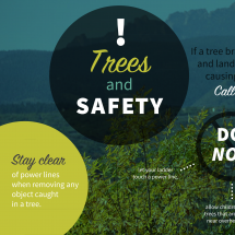Trees & Safety Infographic