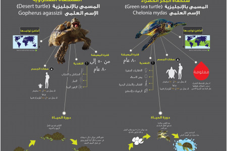 Turtles Infographic