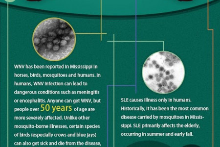 Types of Mosquito-Borne Diseases Infographic