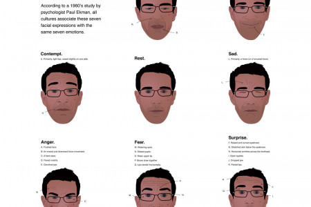 Universal Facial Expressions  Infographic