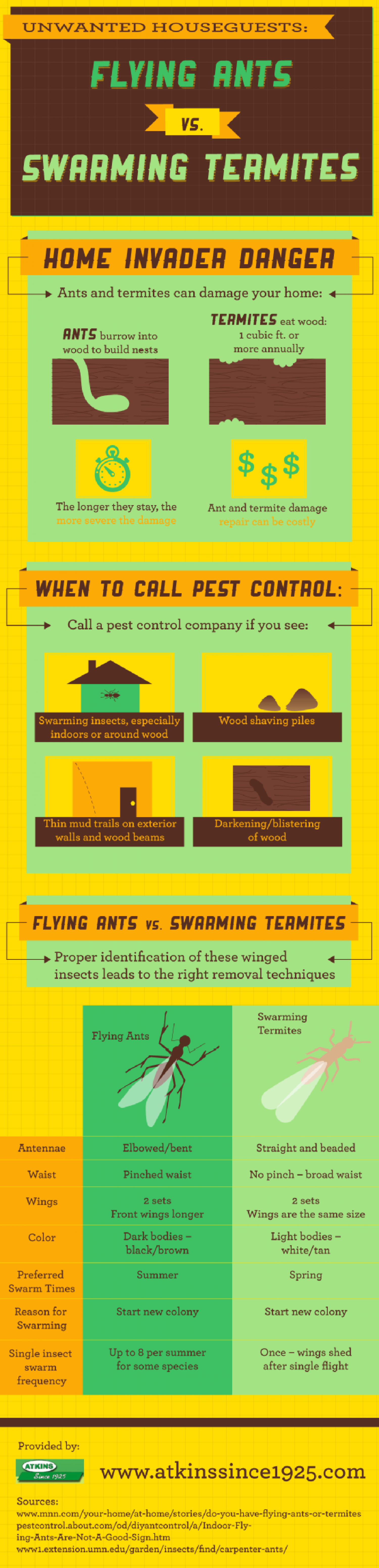 Unwanted Houseguests: Flying Ants vs. Swarming Termites  Infographic