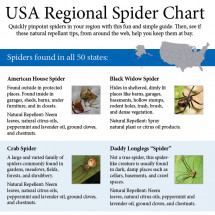 USA Spider Identification Chart Infographic